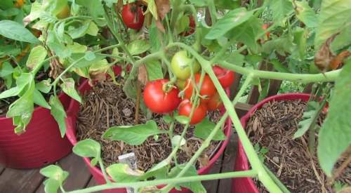 Buah & Sayuran Yang Mengandung Vitamin A