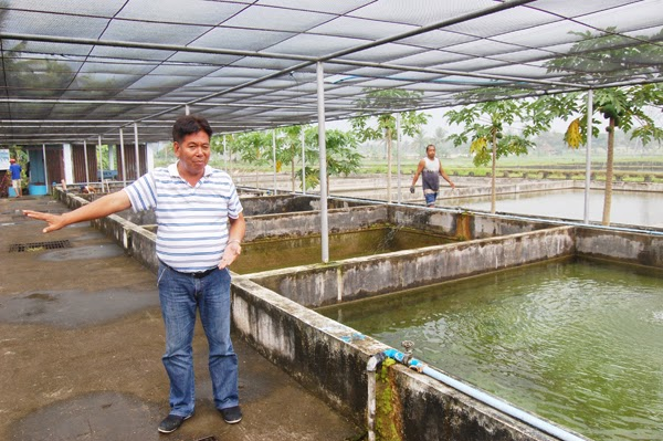 Nature and farming how to raise tilapia in the backyard for Garden pool tilapia