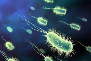 Ciri-ciri bakteri