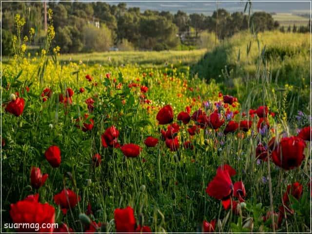 صور ورد - ورود جميلة 4 | Flowers Photos - Beautiful Roses 4