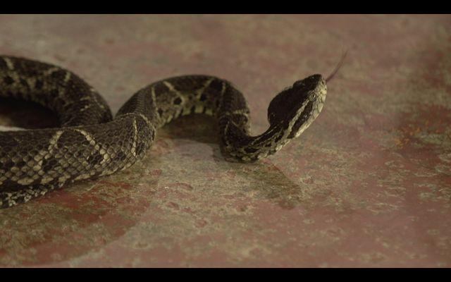 Legado das Águas leva palestra sobre serpentes e animais peçonhentos para aprendizes rurais de Juquiá