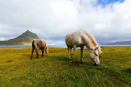 أجمل صور خلفيات خيول 5