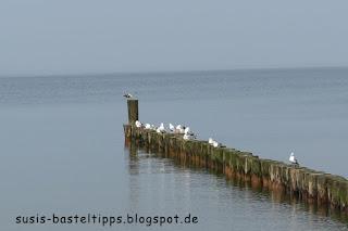 Möwen auf Bohlen an der Ostsee: Foto von unabh. Stampin' Up! Demonstratorin in Coburg