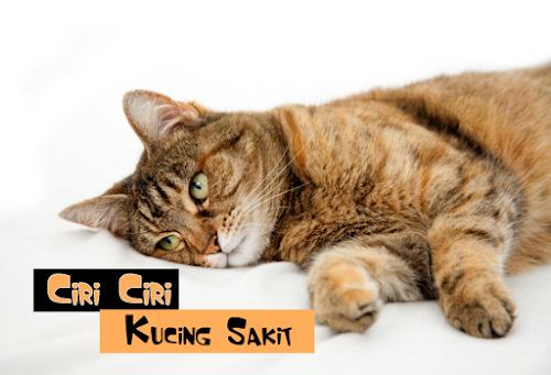 Tanda Kucing Sakit