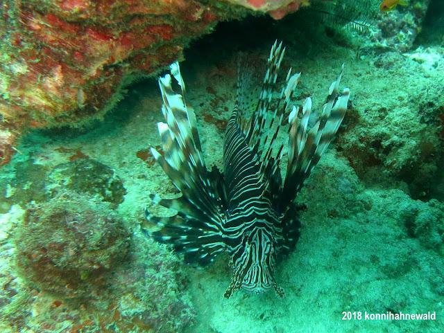 konnihahnewald, uw photography, sumatra, indonesia, pulau weh, sabang, iboih beach, lionfish, devil firefish, andaman sea