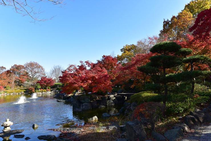 日本庭園の風情が漂う中の大きな池