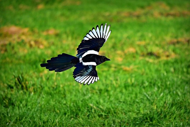 Prospek Bisnis Berjualan Burung Kicau via Fans Page