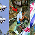 Dating Phil Airforce Officer, Naging Palaboy Sa Kalsada Matapos Kunin Ng Mga Kamag-Anak Nito Ang Buwanang Pensyon.