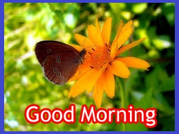 good morning thoughts download For HD