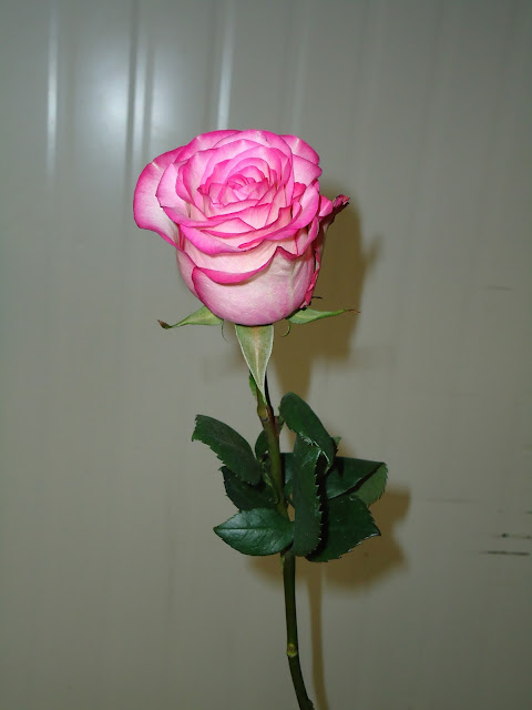 Rosas Unitárias