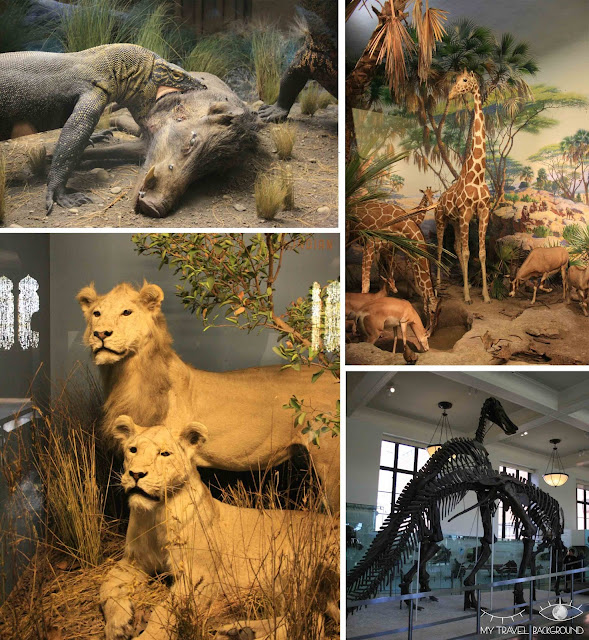 My Travel Background : le musée d'Histoire Naturelle de New York