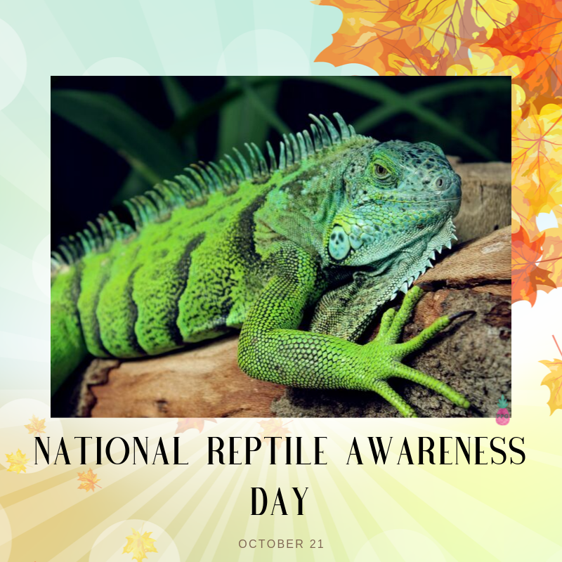 National Reptile Awareness Day Wishes