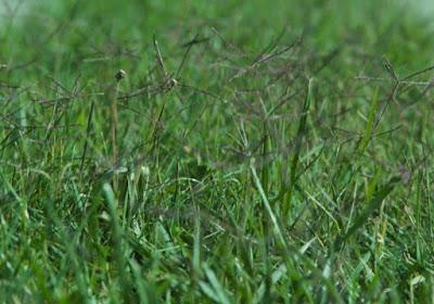 What kills bermuda grass only
