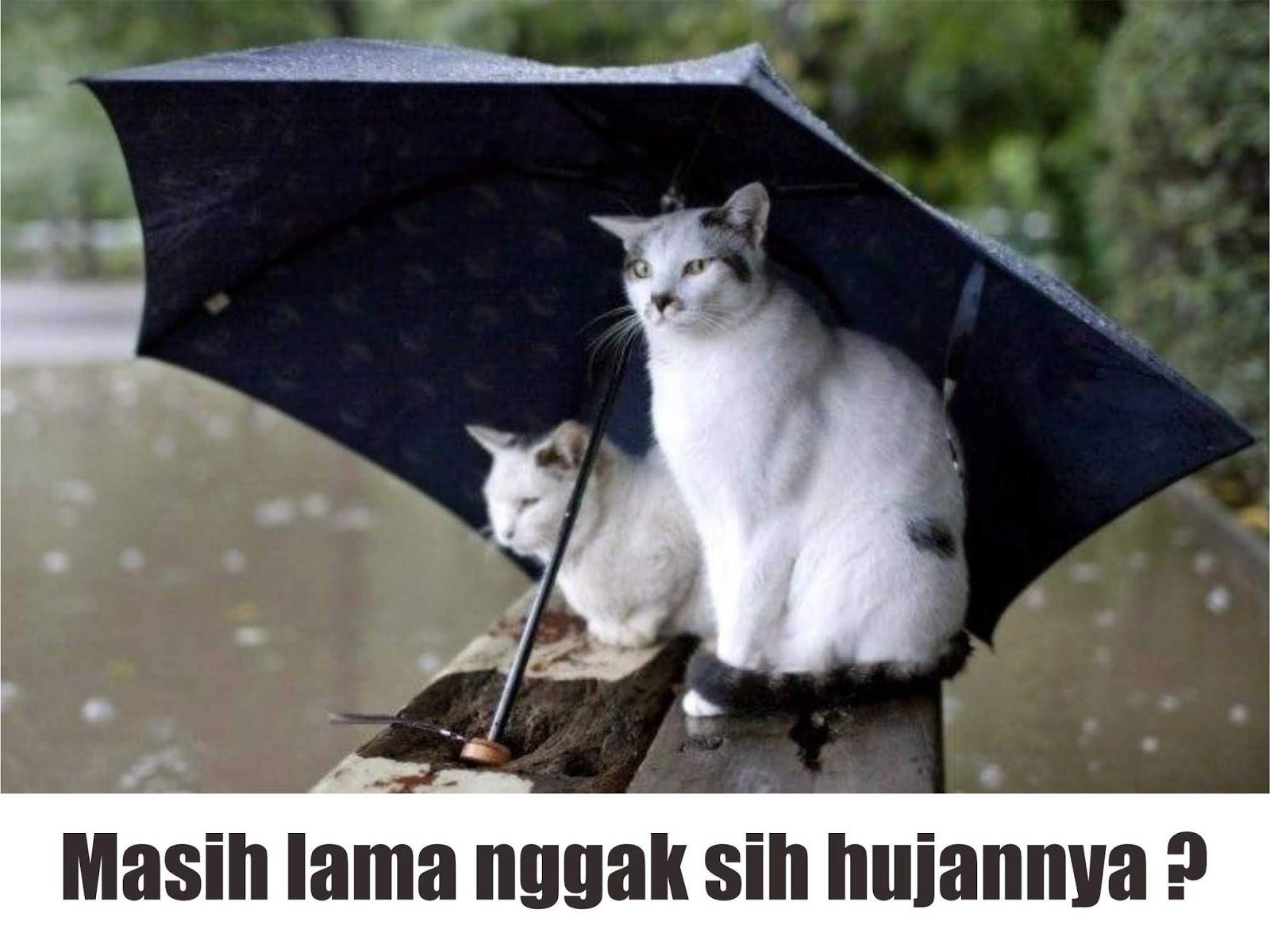 25 Meme Hujan Lucu Terbaru Paling Gokil Dan Kocak Gambar