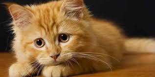Bolehkah Kucing Minum Air Kelapa?