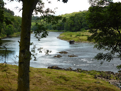 Salmon Fishing Scotland Prospects for the Tay, Perthshire, Scotland week commencing 11th August 2014.