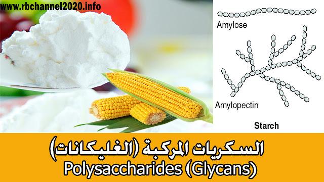 السكريات المركبة ( الغليكانات)  (Polysaccharides (Glycans
