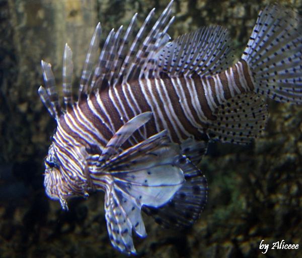cel-mai-frumos-peste-acvariu-constanta