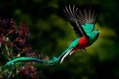 Quetzal ave nacional de Guatemala