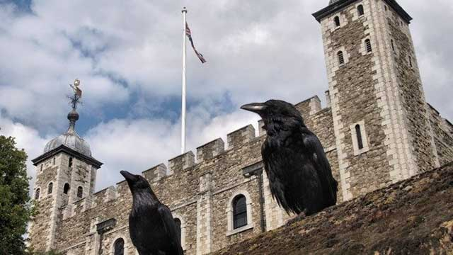 Menara London Dihuni oleh Gagak yang Konon Menentukan Nasib Kerajaan