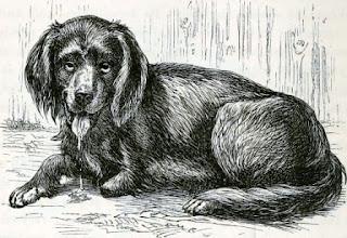 Anjing pengidap rabies