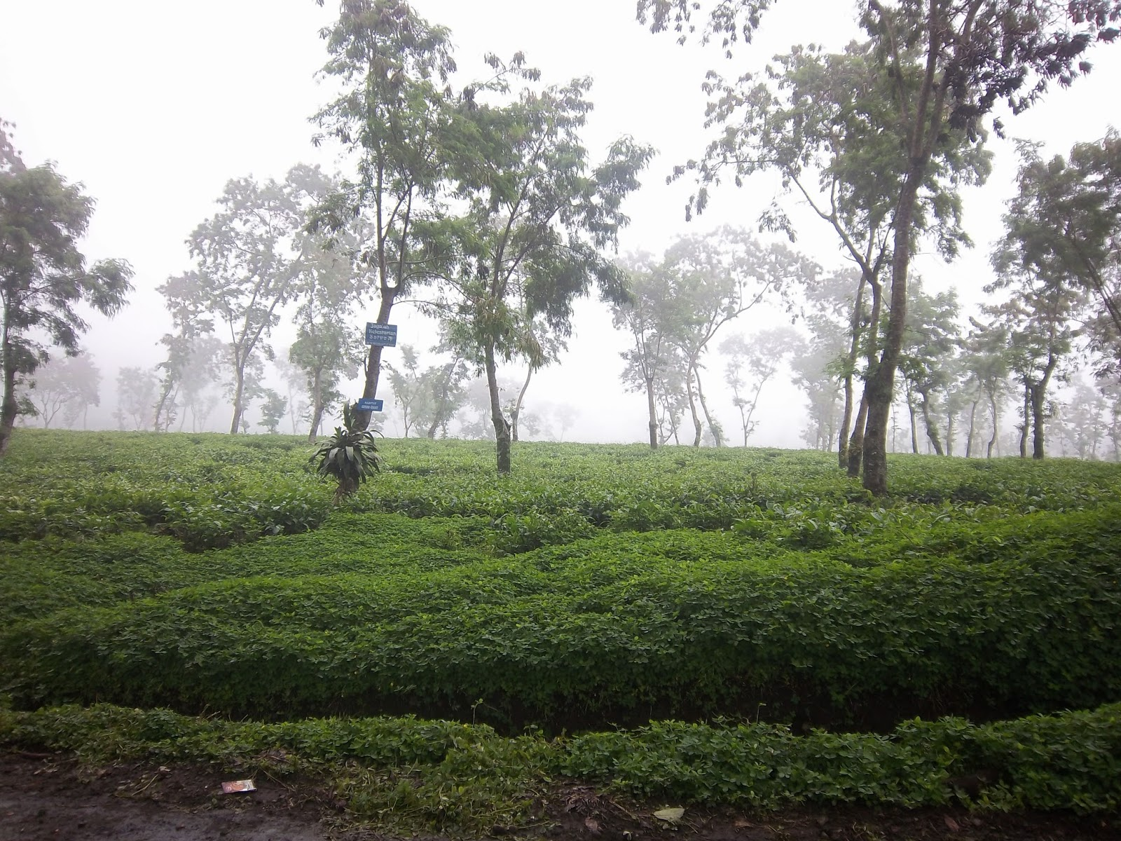 Jalan-jalanku: Kebun raya Purwodadi, Bhakti Alam Purwosari