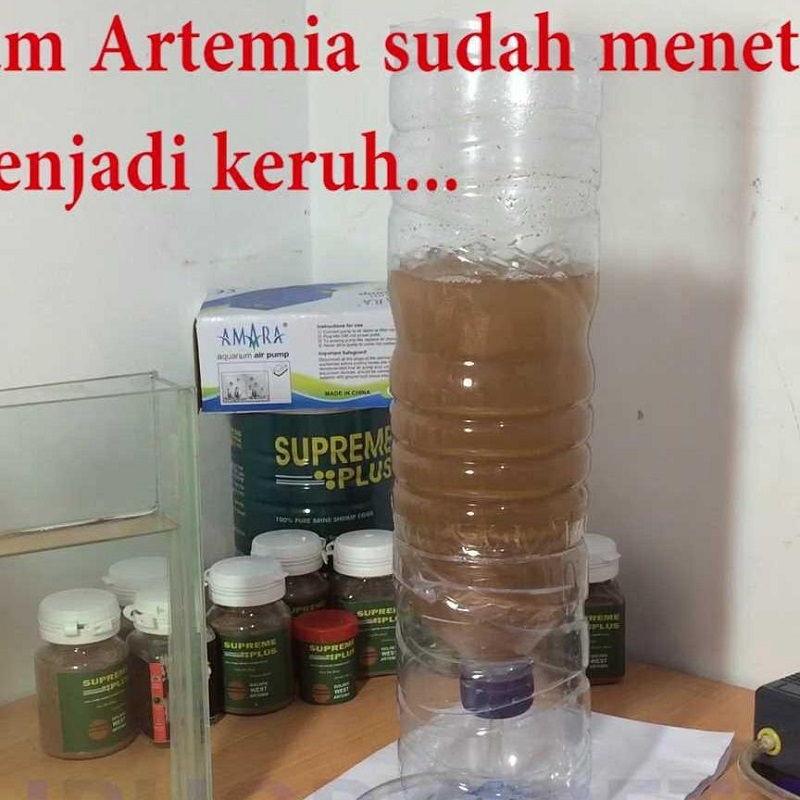 Gambar Cara Menetaskan Artemia Supreme Plus