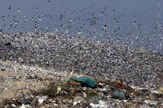 Las ciudades de La Plata, Berisso, Ensenada, Magdalena y Brandsen contarán desde noviembre con una planta de Tratamiento Mecánico Biológico (TMB), capaz de procesar la totalidad de los residuos generados en estos municipios.