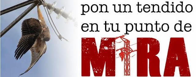 http://objetivotendidos.blogspot.com