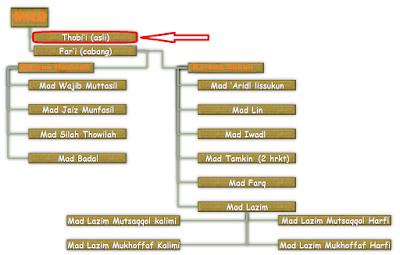 Hukum Bacaan Mad Thabi'i dan Contohnya Dalam Alqur'an