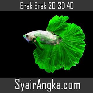 Erek Erek Ikan Cupang di Buku Mimpi 2D 3D 4D Lengkap