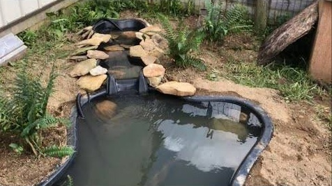 Kandang kura-kura air tawar