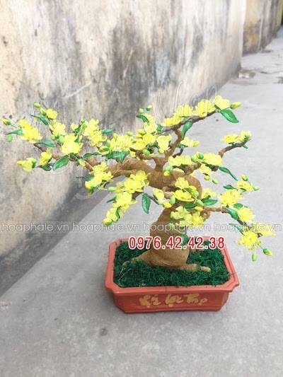 Goc bonsai cay hoa mai tai Nguyen Van Huyen