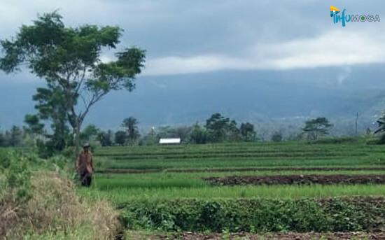 Prakiraan BMKG: Cuaca Moga dan Sekitarnya Sepanjang Hari Ini Cerah Berawan