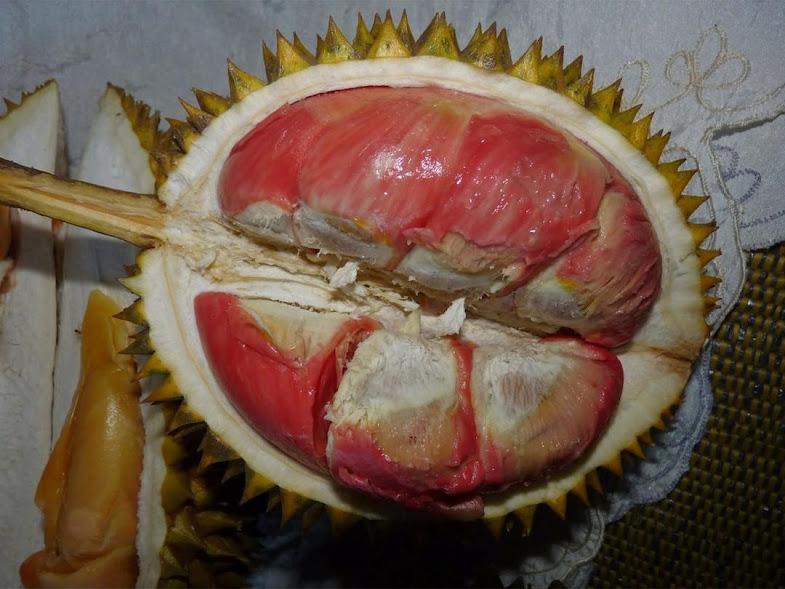 Bibit Tanaman Buah Durian Merah Banyuwangi Berkualitas Jawa Barat