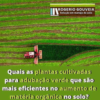 Quais as plantas cultivadas para adubação verde que são mais eficientes no aumento de matéria orgânica no solo?