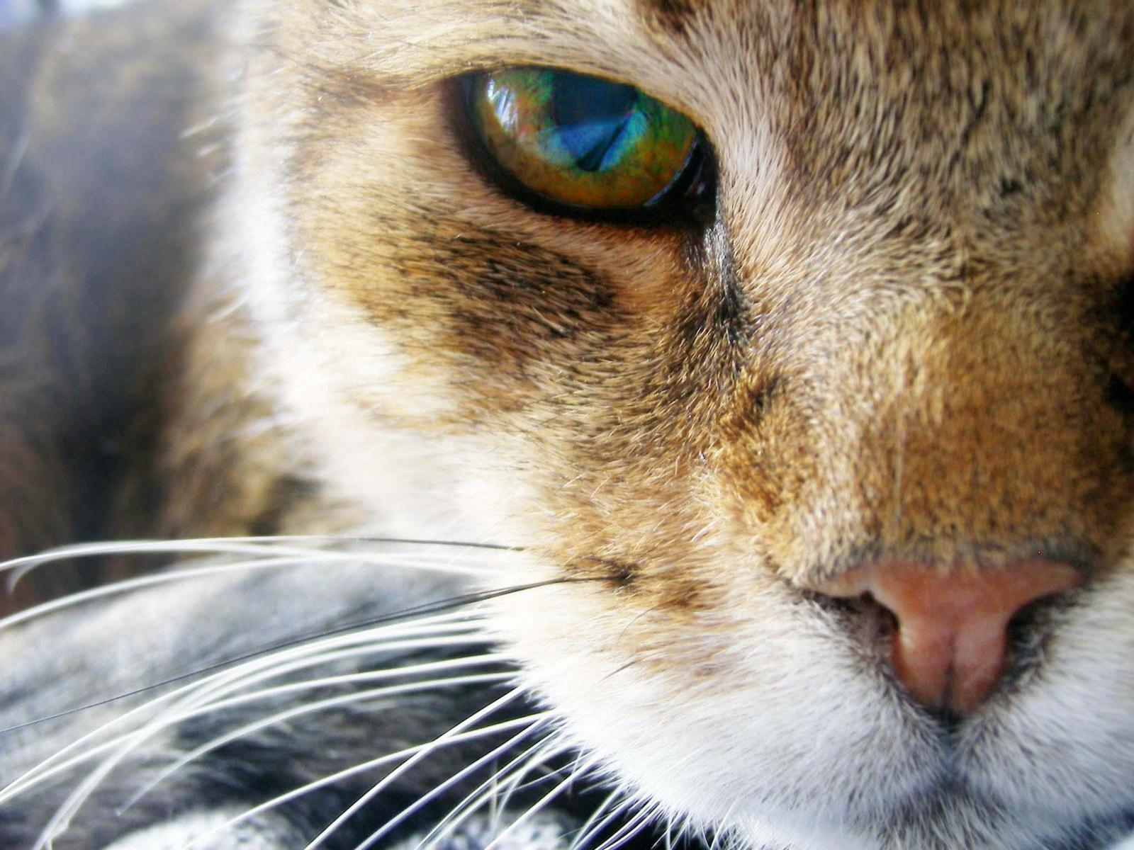 Window 7 HD Wallpaper: Animal HD Wallpapers