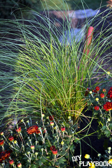 Phoenix Green Plant