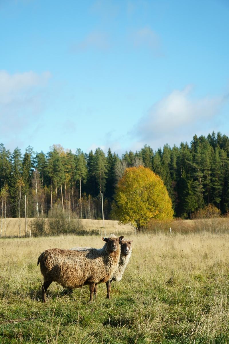 lammaslaidun