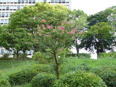 大阪城公園城南地区 水場 サルスベリ