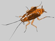 Cara Membasmi Serangga Yang Sering Datang Di Rumah