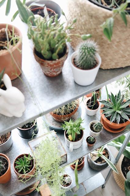 plantes sur étagère