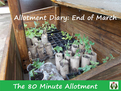 Allotment Diary 80 Minute Allotment Green Fingered Blog