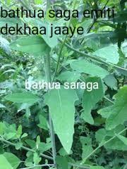 period samasya bathua saga