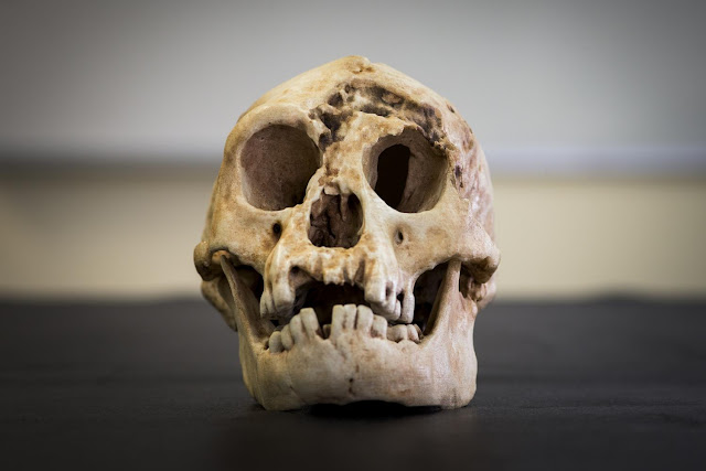 Indonesian 'hobbits' not related to Homo erectus