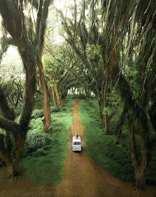 Hutan Djawatan Banyuwangi