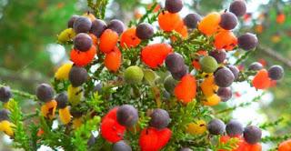 شجرة واحدة تنتج أربعين نوعًا من الفواكه