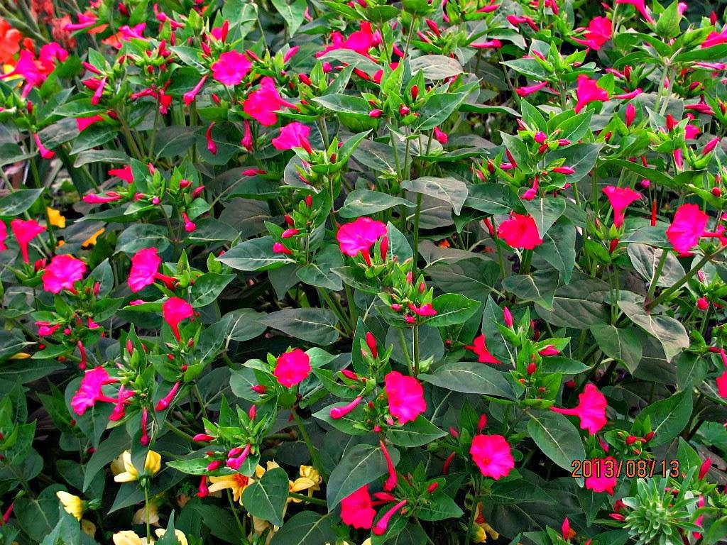 Фото одиночные цветы