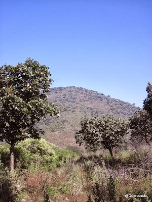 Cumbre del Cerro Las Latillas vista desde el bosque de encinos
