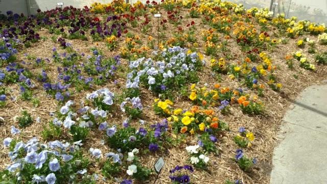 Botanica Wichita KS Gardens sp
